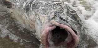 The Train Derailment That Gushed Oil Into A Quebec River Has Spawned Freaky Fish